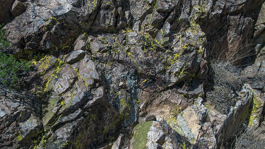 Lichen (1 of 1) blog