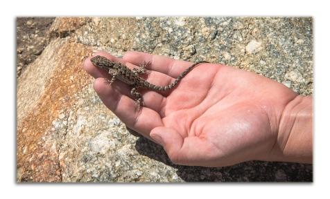 Lizard-0825 Ornate Tree blog