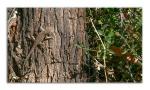 Ned's Nature Walk-9753 blog II