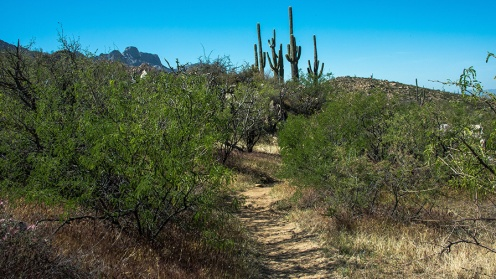 Sutherland Trail (1 of 1)-9 blog