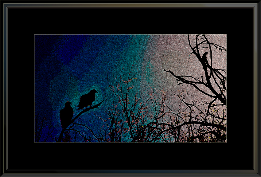 Turkey Vultures (1 of 1)-4 Artblog framed
