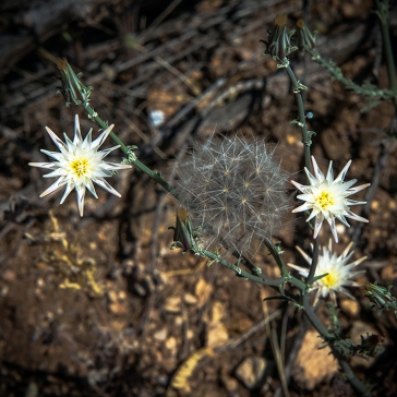 Wildflowers (1 of 1)-24 blog