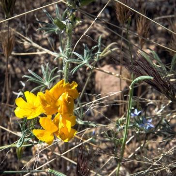 Wildflowers (1 of 1)-25 blog