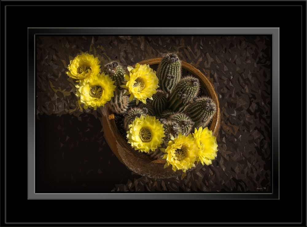 Yellow Cactus Flowers (1 of 2) blog