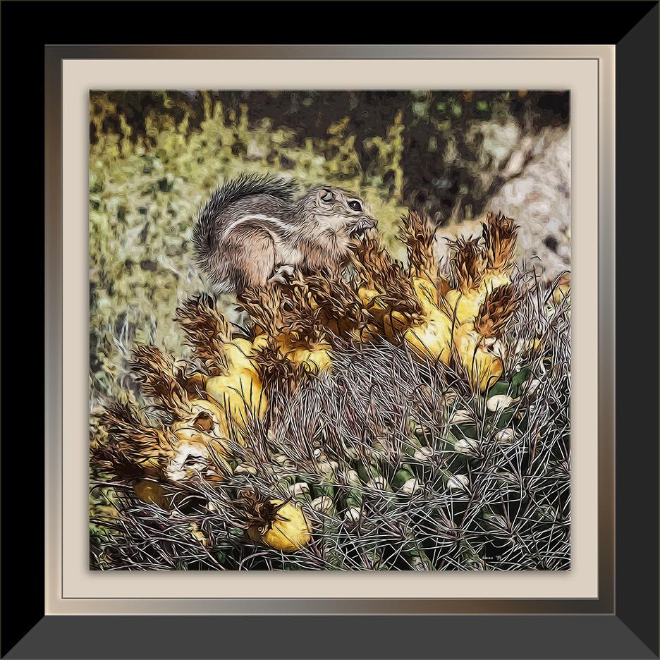 Harris's Antelope Squirrel (1 of 1) Art blog framed