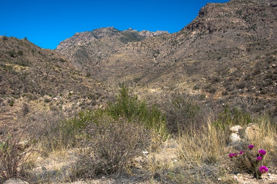 Pusch Ridge Wilderness Area