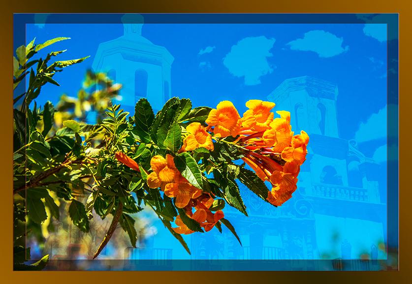 Spring Flower (1 of 1)-2 framed blog