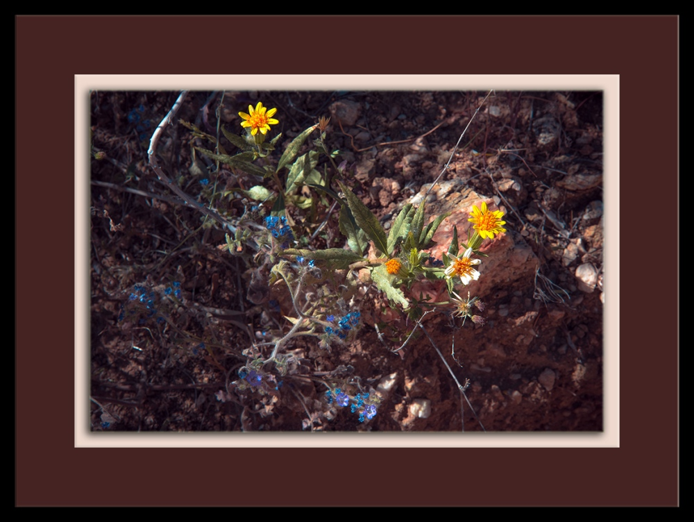 Widflowers (1 of 1) blog framed