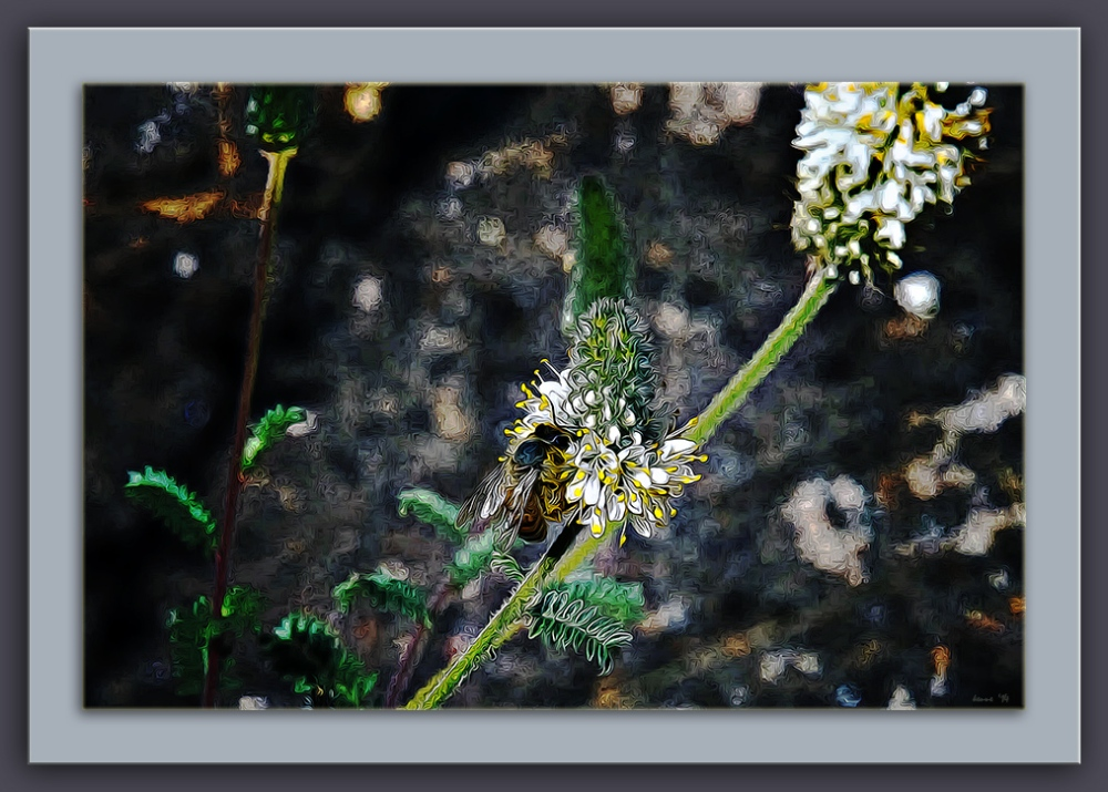 Widflowers-Honey Bee (1 of 1) art II blog framed