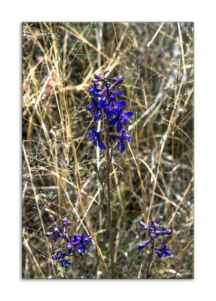 Wildflower (1 of 1) b framed