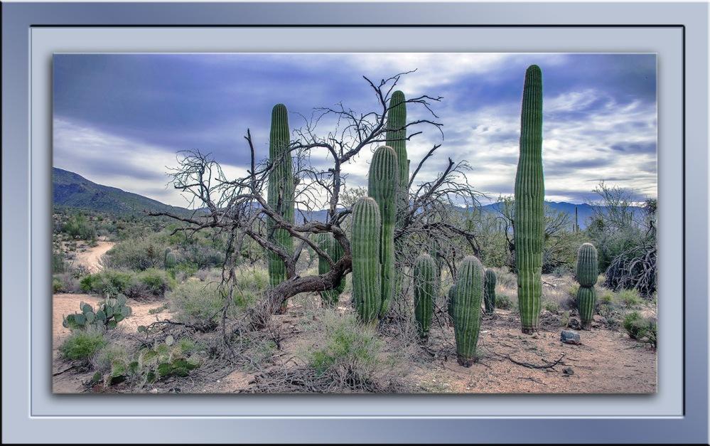 Desert Scene blog
