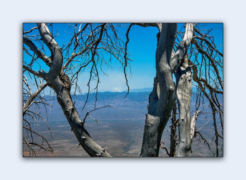 Forest Fire (1 of 1)-2 blog framed