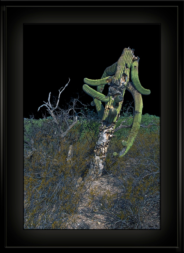 Old Cactus (1 of 1)-2 Art_blog