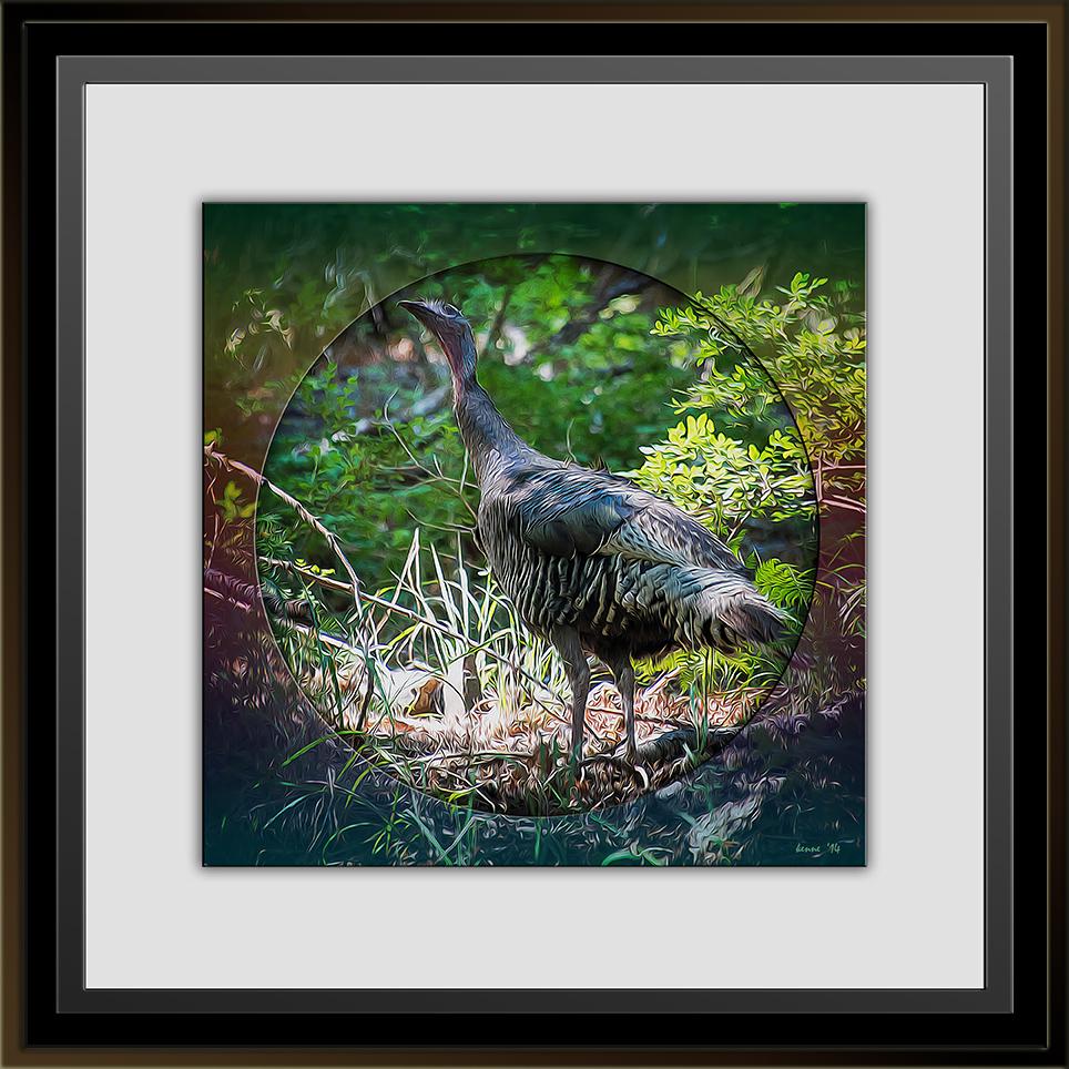 Wild Turkey (1 of 1)-3 art II blog II