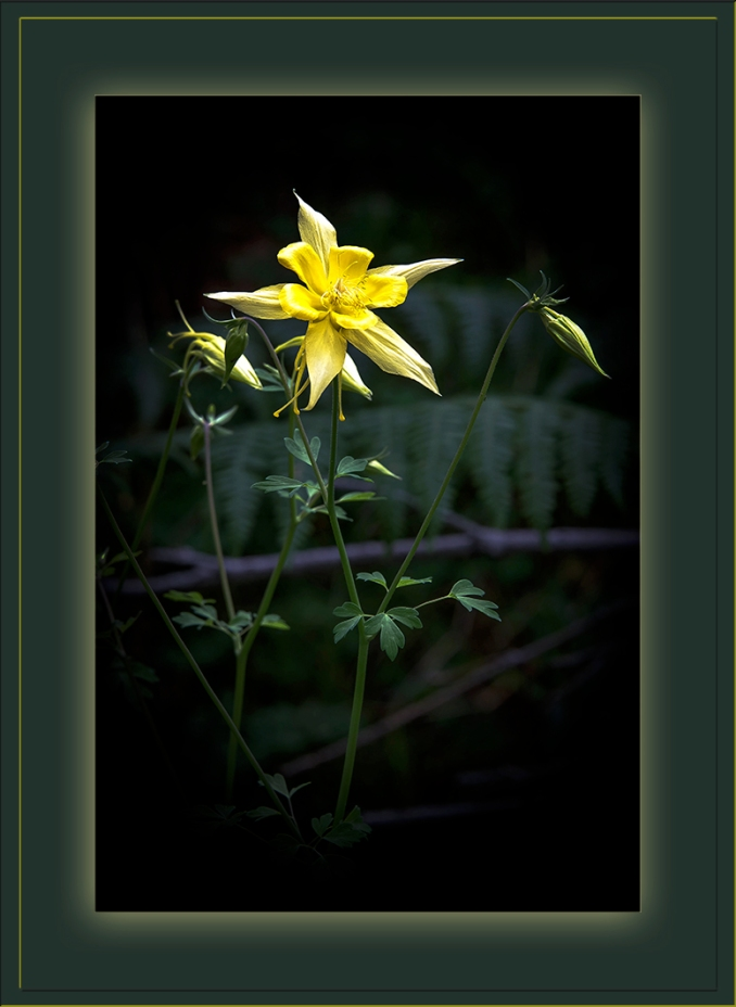 Columbine (1 of 1)_blog