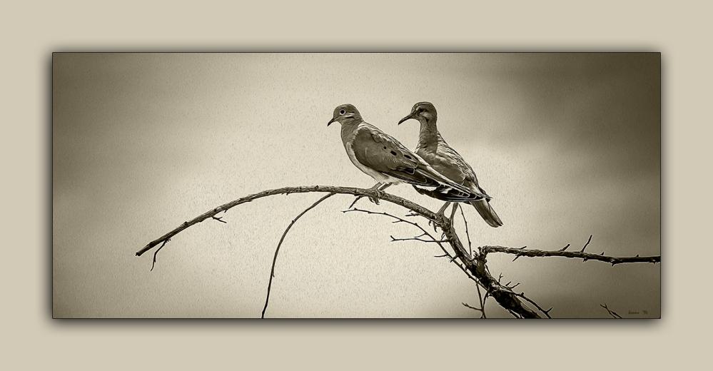 Doves (1 of 1)-3 art B-W blog