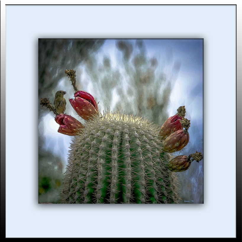 Saguaro (1 of 1) Contrast blog