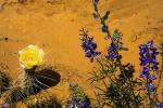 Utah Wildflower (1 of 1)-10blog