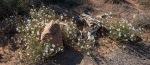 Utah Wildflowers (1 of 1)-3blog