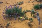 Utah Wildflowers (1 of 1)-7blog