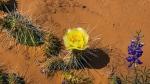 Utah Wildflowers (1 of 1)-9blog