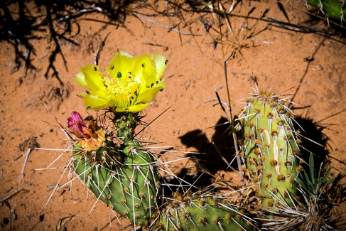 Utah Wildflowers(1 of 1)-4 blog