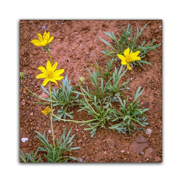 Wildflowers (1 of 1) blog
