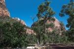 Zion Park (1 of 1)-21blog
