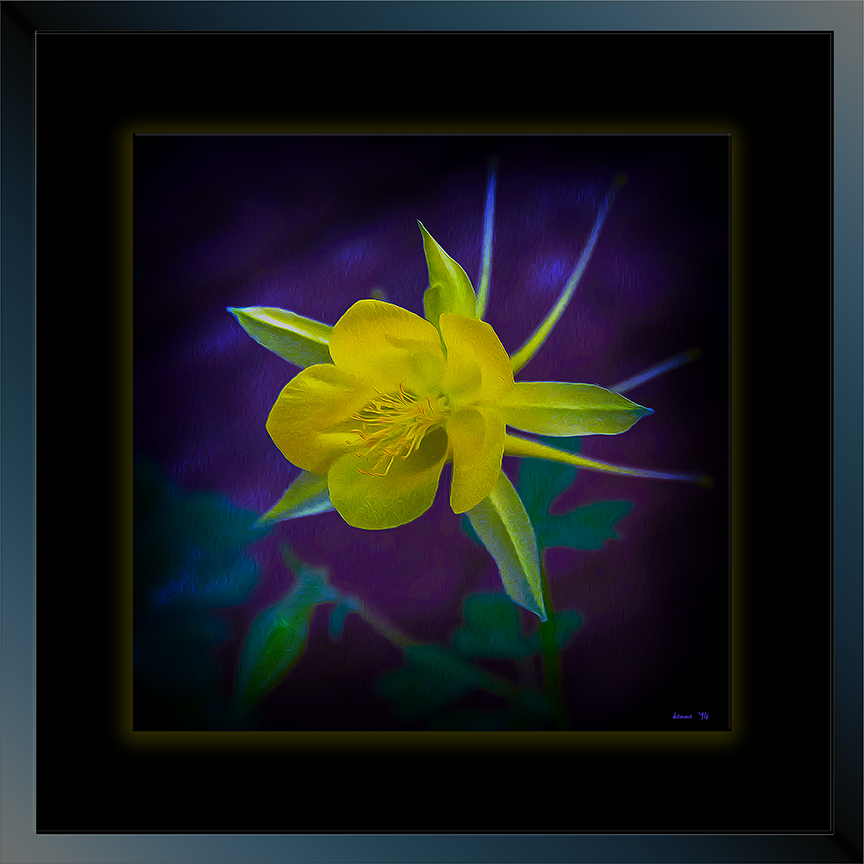 Golden columbine (1 of 1) art_II. blog