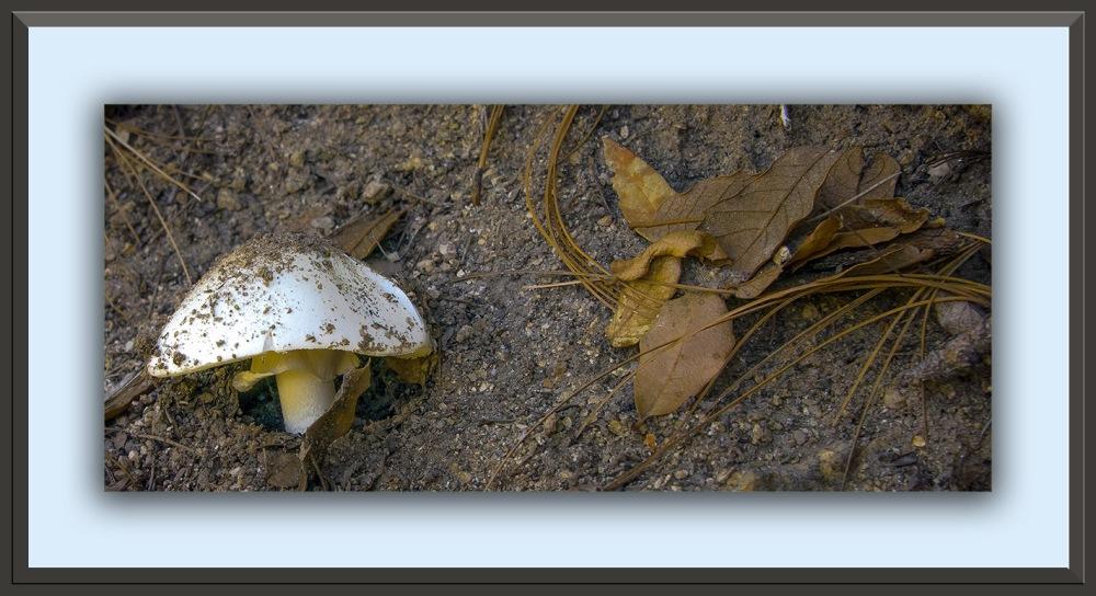 mushroom (1 of 1 blog)