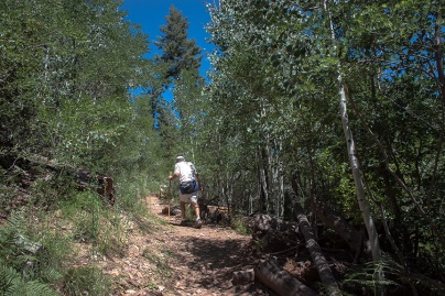 Jim On the Trail Through New Aspen Growth