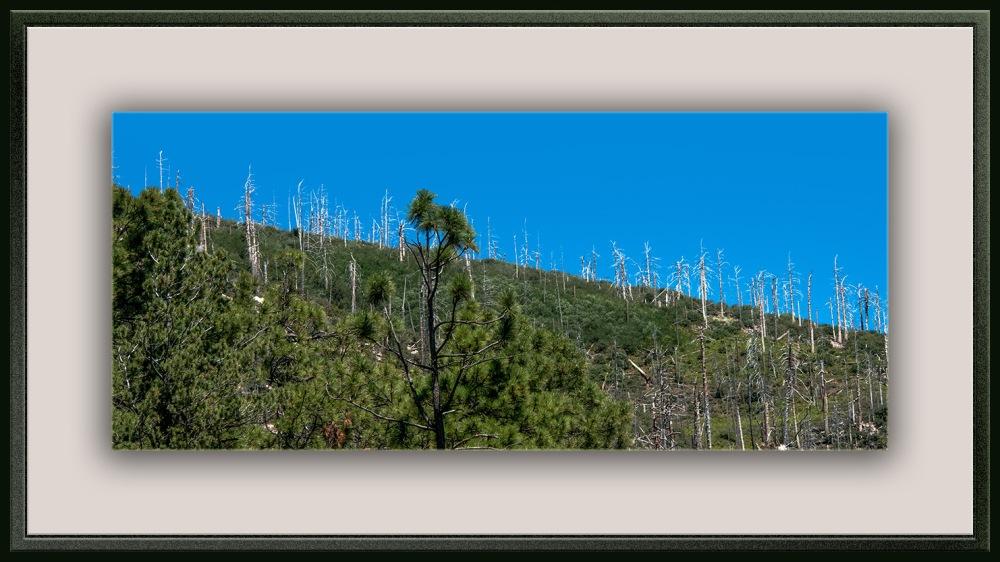 Brunt Trees (1 of 1) blog