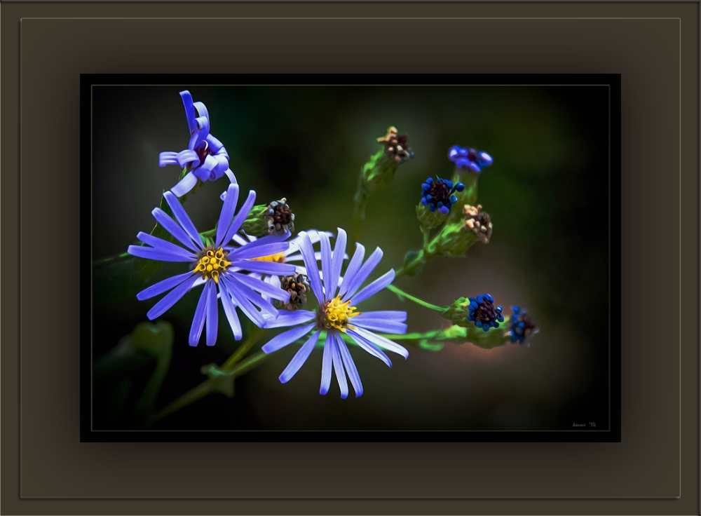 Flower Garden (1 of 1)-10 Wall Flower blog