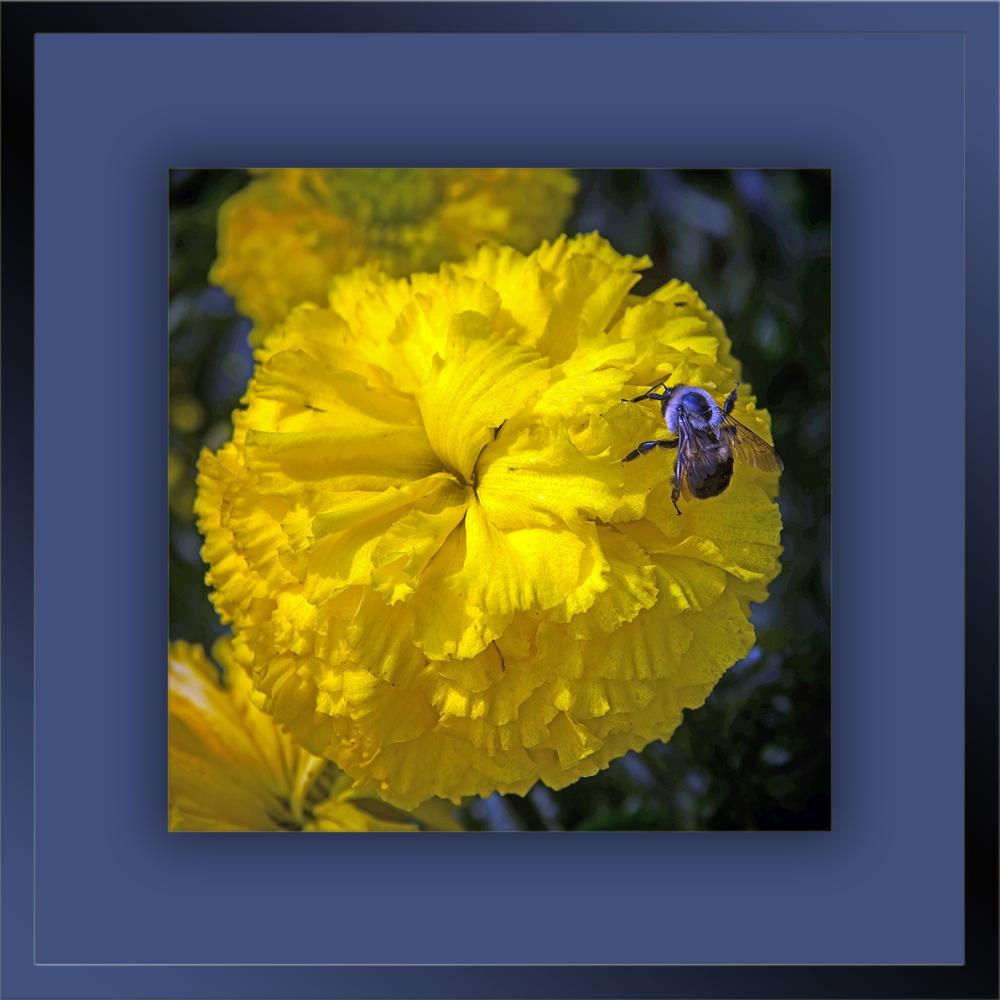 Flower Garden (1 of 1)-3 blog