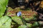 Lupine Blue (1 of 1)-2blog