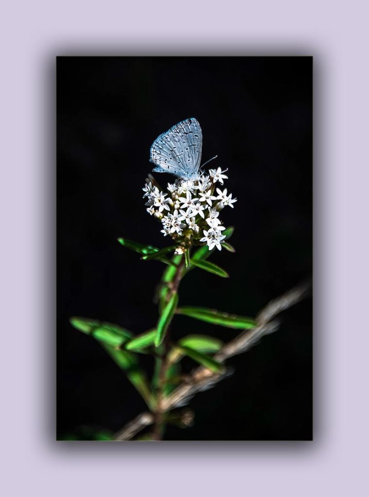 Lupine Blue (1 of 1)-5 blog