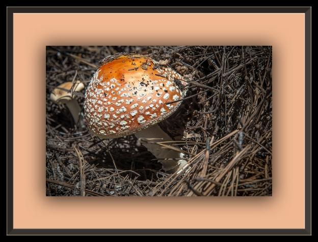 Mushroom (1 of 1)-2 blog