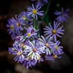 Poudre River Wildflowers (1 of 1)-13blog