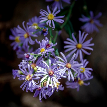 Poudre River Wildflowers (1 of 1)-13 blog
