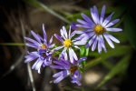 Poudre River Wildflowers (1 of 1)-15blog