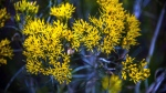 Poudre River Wildflowers (1 of 1)-18blog