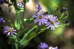 Poudre River Wildflowers (1 of 1)-7blog