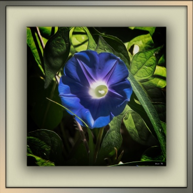 Wildflowers (1 of 1)-17 blog