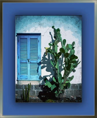 Cactus & Shutter (1 of 1)-2 art blog