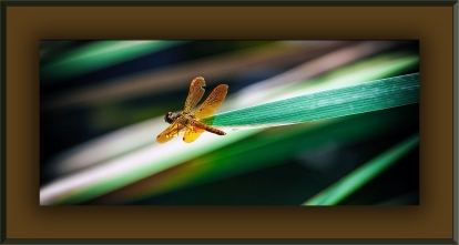 Dragonfly (1 of 1)-4 blog