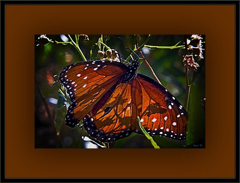 Queen Butterfly (1 of 1)-5 Art-2 blog
