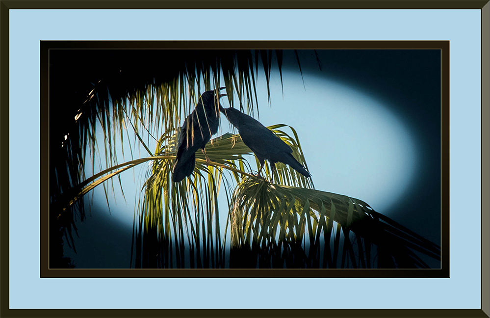 Ravens (1 of 1)-3 Framed blog