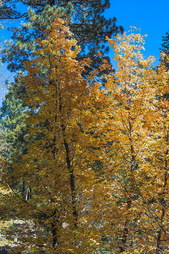 Ski Vally Colors (1 of 1) blog