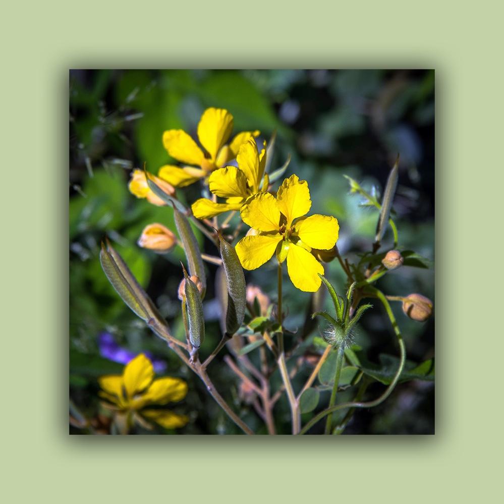 Wildflowers (1 of 1)-6 blog