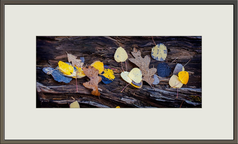 Bear Wallow  Leaves(1 of 1)-18_blog